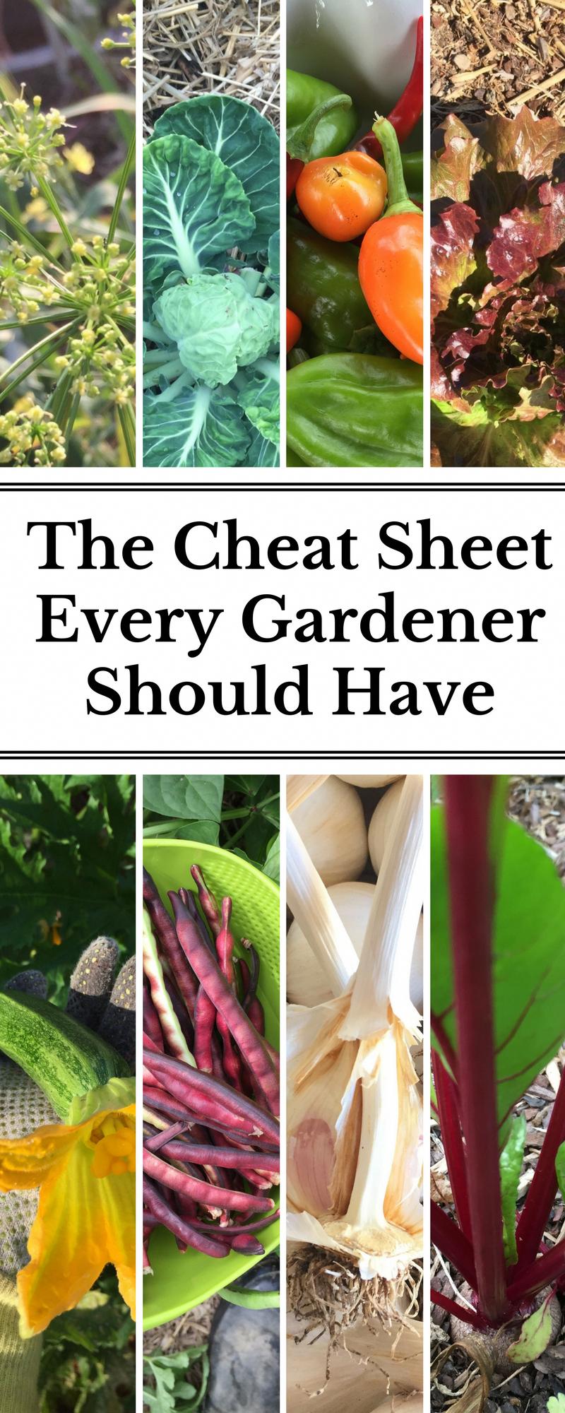 Pflanzenfamilien: Der geheime Spickzettel, den jeder Gärtner haben sollte –  Gu…