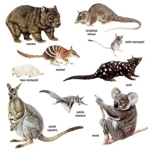 Blog Educativo Sobre Ciencia Historia Ecología Mundo Animal Y Muchos Otros Temas Interesantes Marsupiales Animales Australianos Animales