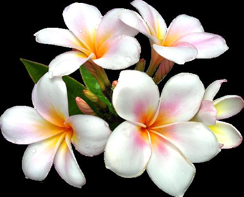épinglé Par Aloha Sur Photos Images Dessin Fleur Fleur
