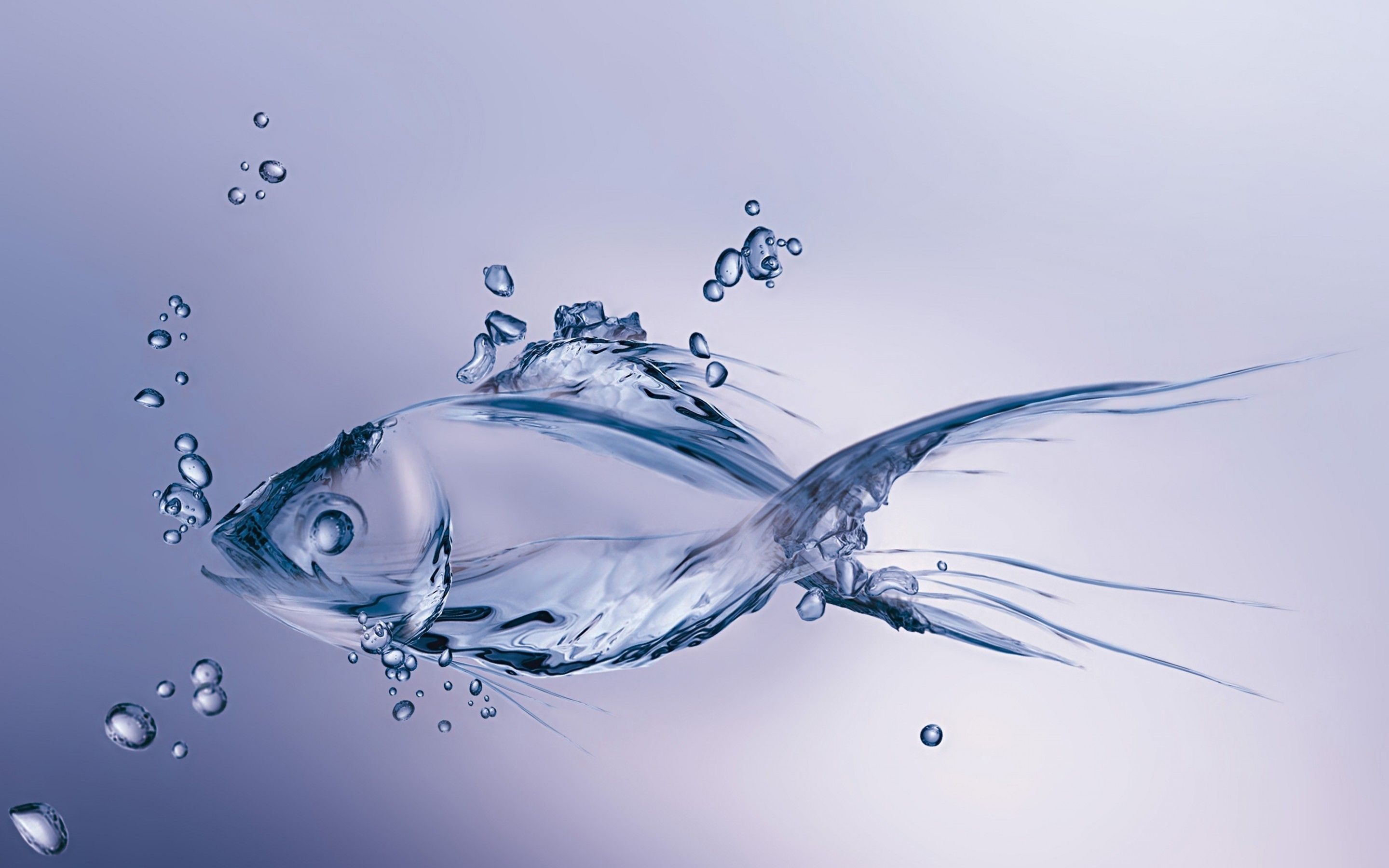 Beautiful Fish Wallpapers HD Pictures One HD Wallpaper