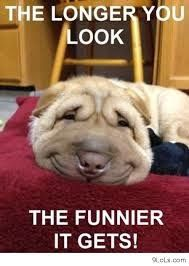 cute and funny dog posters most famous dogs pinterest dog