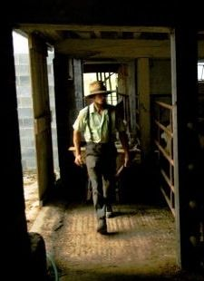 Amish Grace...Amish dairy farmer, Daniel Stoltzfus, in his barn