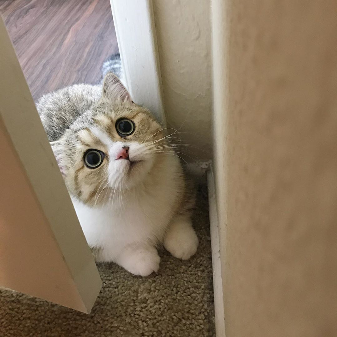 Are These The Most Beautiful Cats In The World Cute Animals