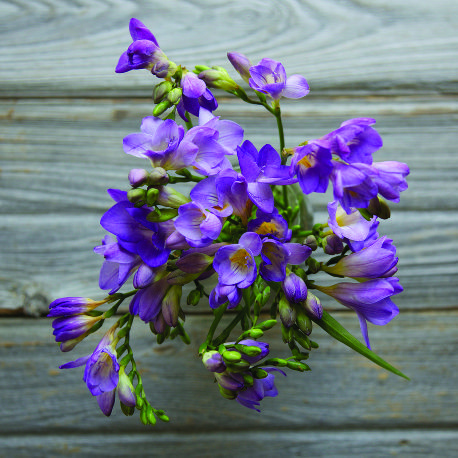 Sonoma Stop Your Feet For Freesia So Sweet Flowers Online Flower Delivery Fresh Flowers Online Flower Delivery