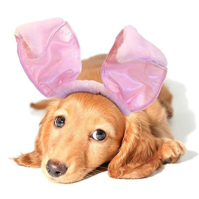 dogs with bunny ears - Google Search
