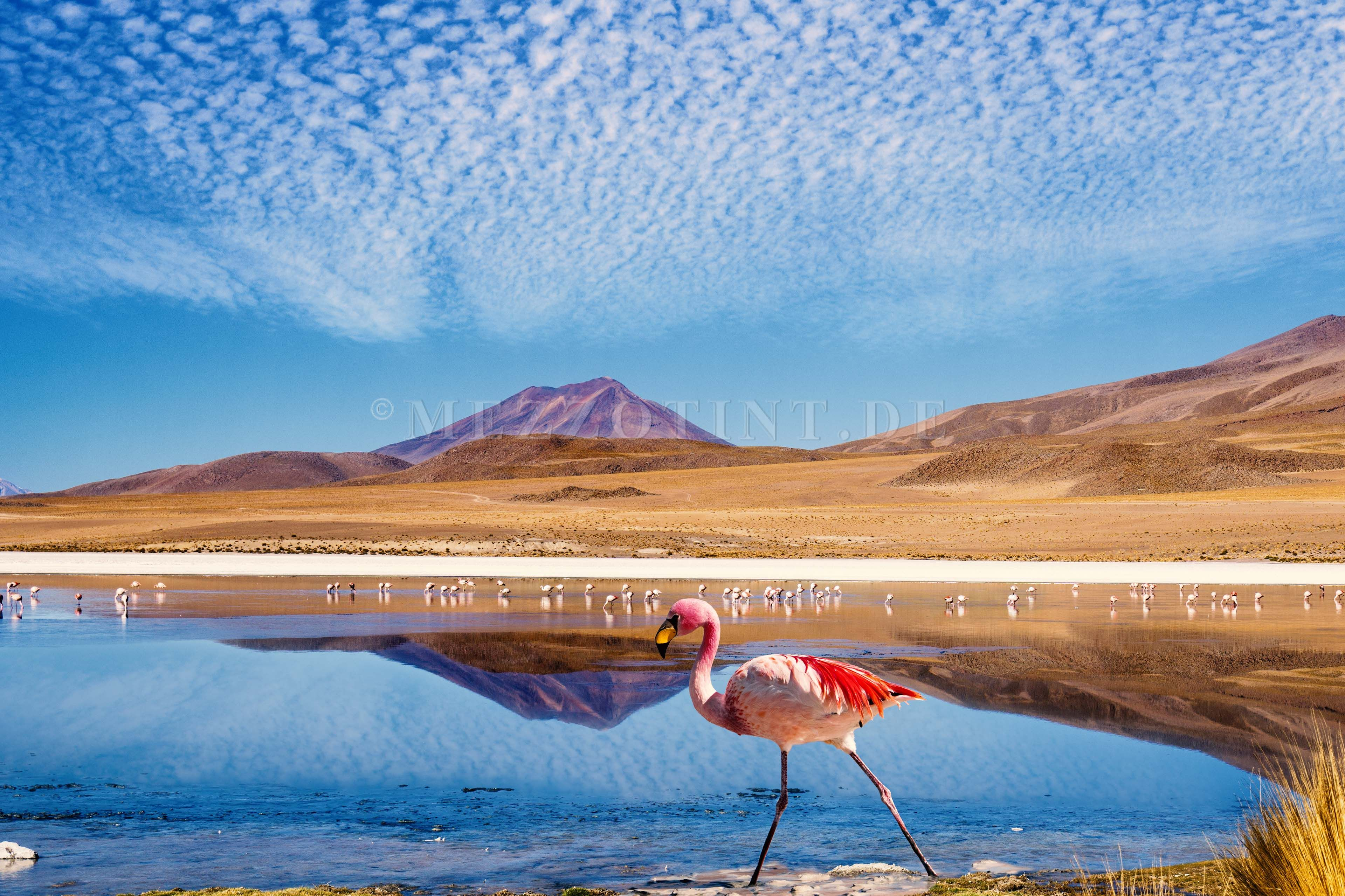 image result for bolivia flamingo planet fragile location for the