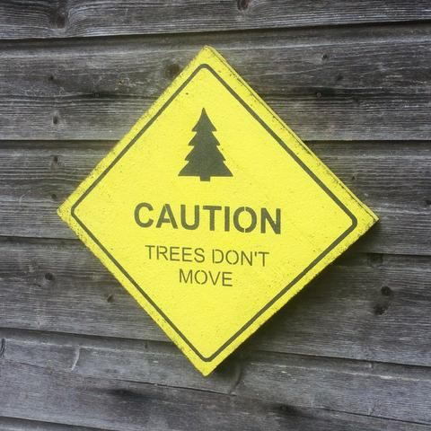 Caution - Trees don\'t move | Wall decor, Wooden wall decor and ...