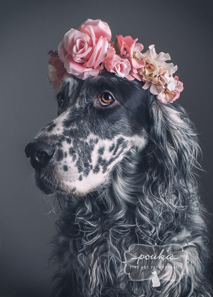 Beautiful girl! A beautiful English Setter with a flower