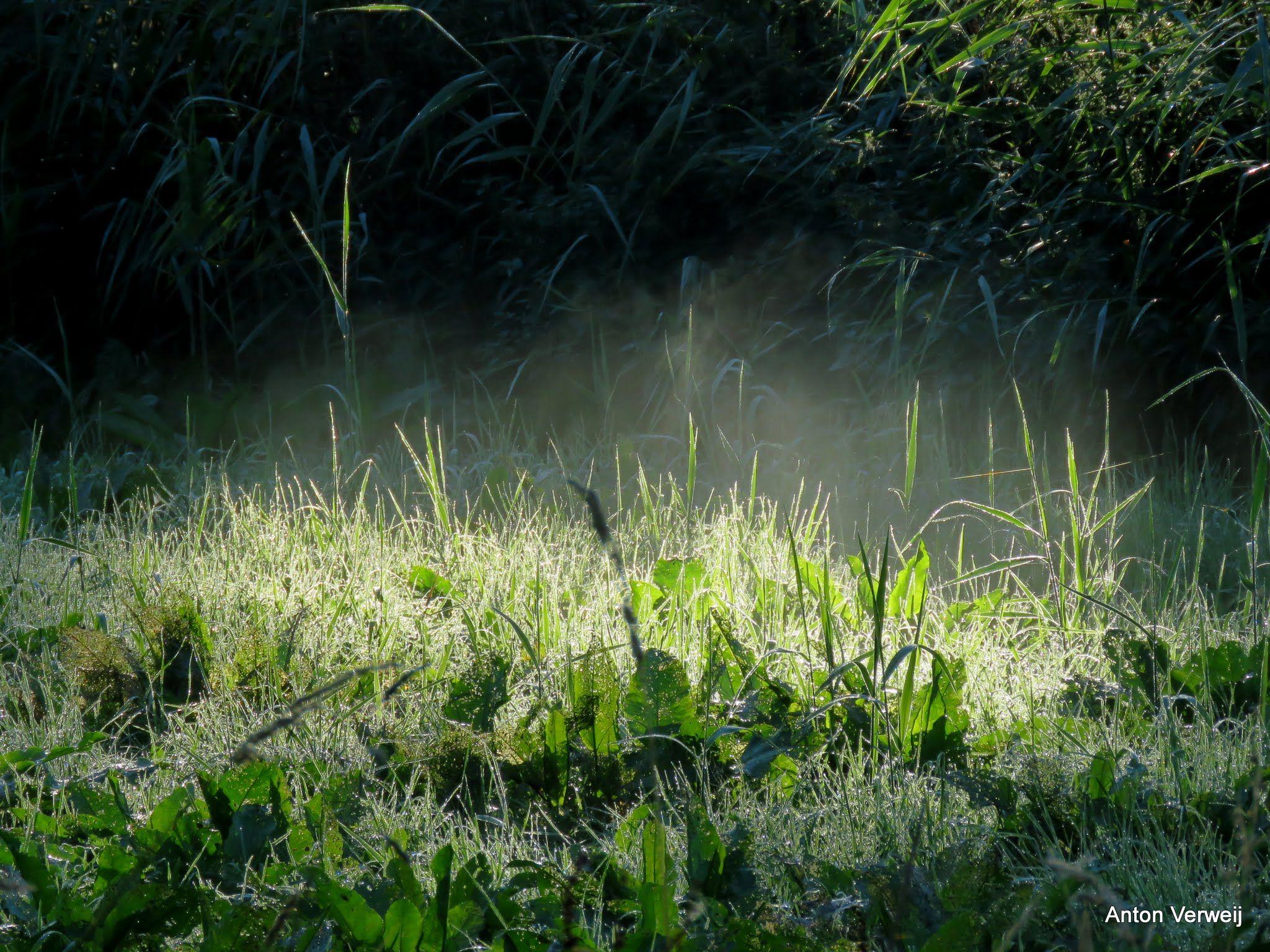 Duizend dauwdruppels morgenlicht ... http://godisindestilte.blogspot.nl/2016/08/duizend-dauwdruppels-morgenlicht.html