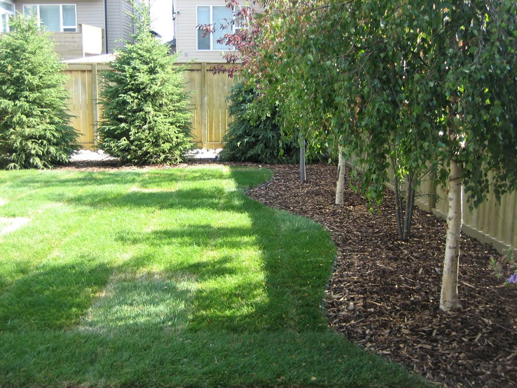Best backyard tree ideas on pictures of houses and play for Back garden landscaping ideas
