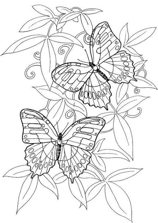 Hard Butterflies Coloring Pages For Adults To Print Adult
