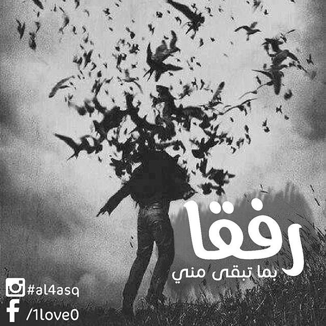 Al4asq Instagram Photo Instidy Com Instagram Online Viewer Instagram Analytics Instagram Website Instagram