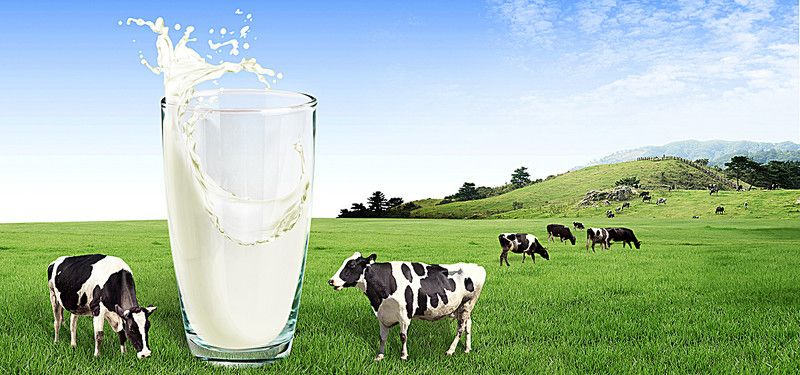 Cup Milk Cows Green Grass Wave Poster Banner