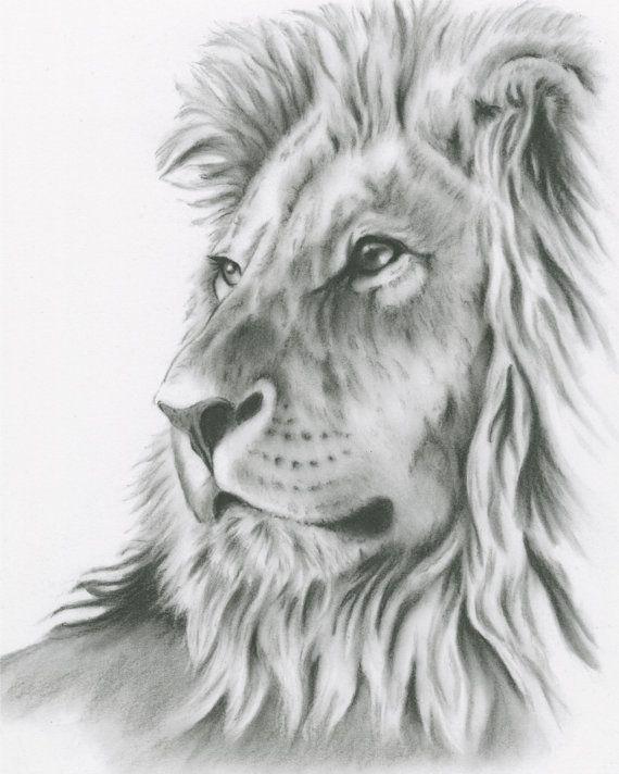 dessin au fusain 8 x 10 art lion original par jaclynsstudio