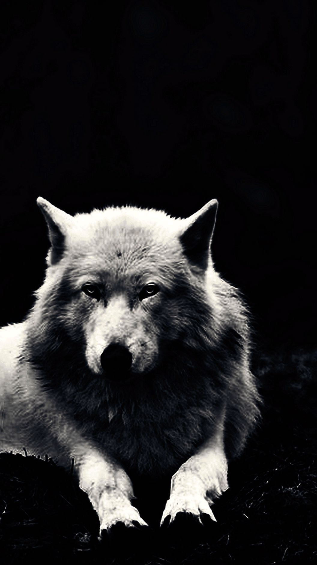Black Wolf Hd Mobile Wallpaper