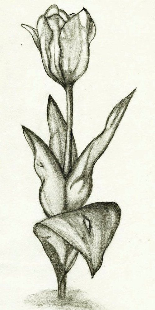 Tutorial Gambar Bunga Tulip Sketsa Gambar Bunga Tulip Nan Unik Resep Untuk Dicoba Bunga Muat Turun Bermacam Contoh Gambar M Sketsa Bunga Sketsa Bunga Tulip