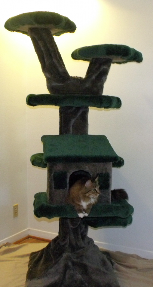 Cat Trees And Condos Cat Tree House Cool Cat Trees Cat Playground