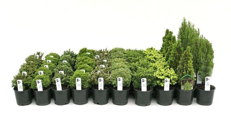 Garden Express Market and Distribution, LLC - Fanciful Garden ...