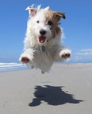 Yippie!! I'm finally at the beach! #Beach #Pup #Dogs