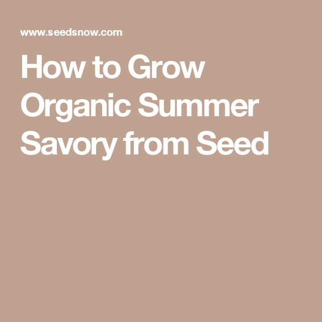How to Grow Organic Summer Savory from Seed