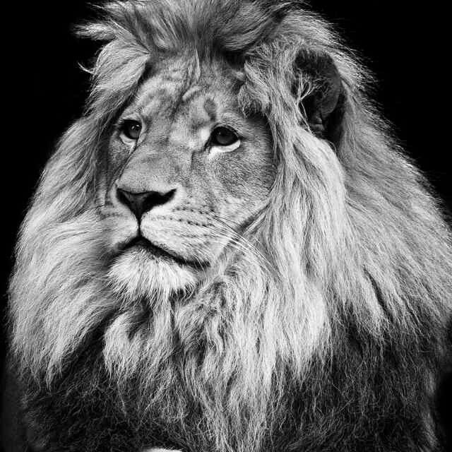 Leão da Tribo de Judá