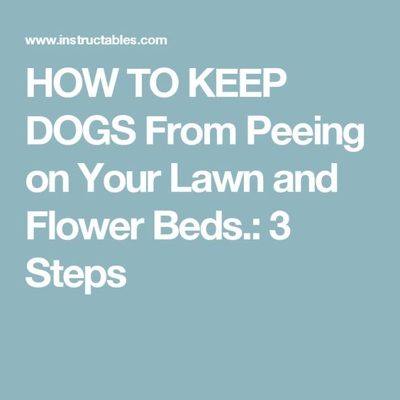 HOW TO KEEP DOGS From Peeing on Your Lawn and Flower Beds  is part of Grass lawn Flower Beds - HOW TO KEEP DOGS From Peeing on Your Lawn and Flower Beds  this will keep dogs from peeing on your flowers and grass NO MORE YELLOW!