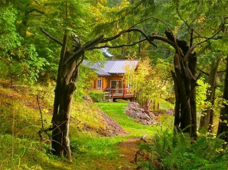 Romanic Green Forest With A House Forest House Lovely Cabin Romantic Nice Leaves Beautiful House Forest House House Forest Country Roads Take Me Home Beautiful wallpaper house photo