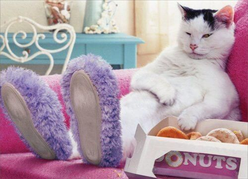 Donuts Funny Cat Birthday Card In 2020 Cat Birthday Card Cat