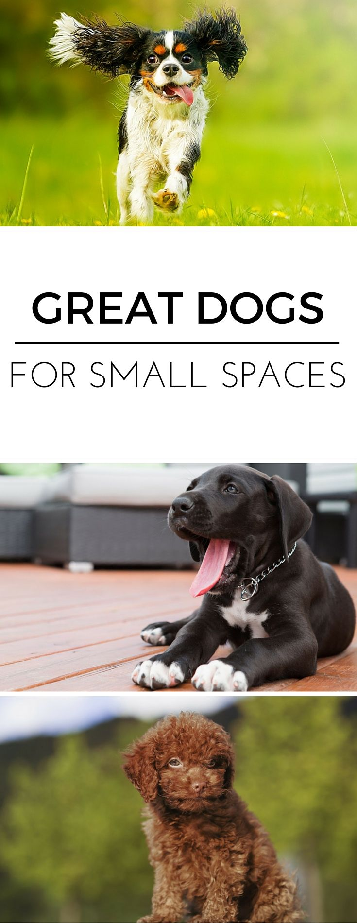 What Is The Best Dog For A Small Apartment