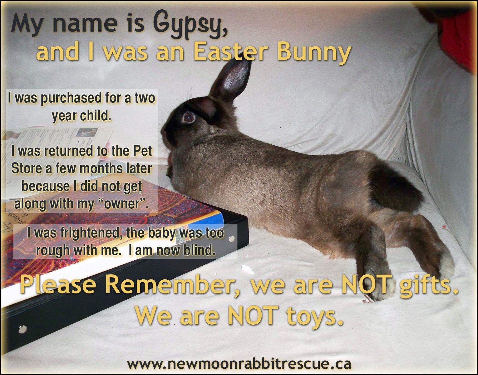 Monday Meme*day for Easter (Part 2) Rabbit, Animal