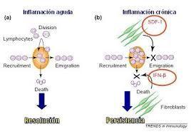 Resultado de imagen para inflamacion aguda