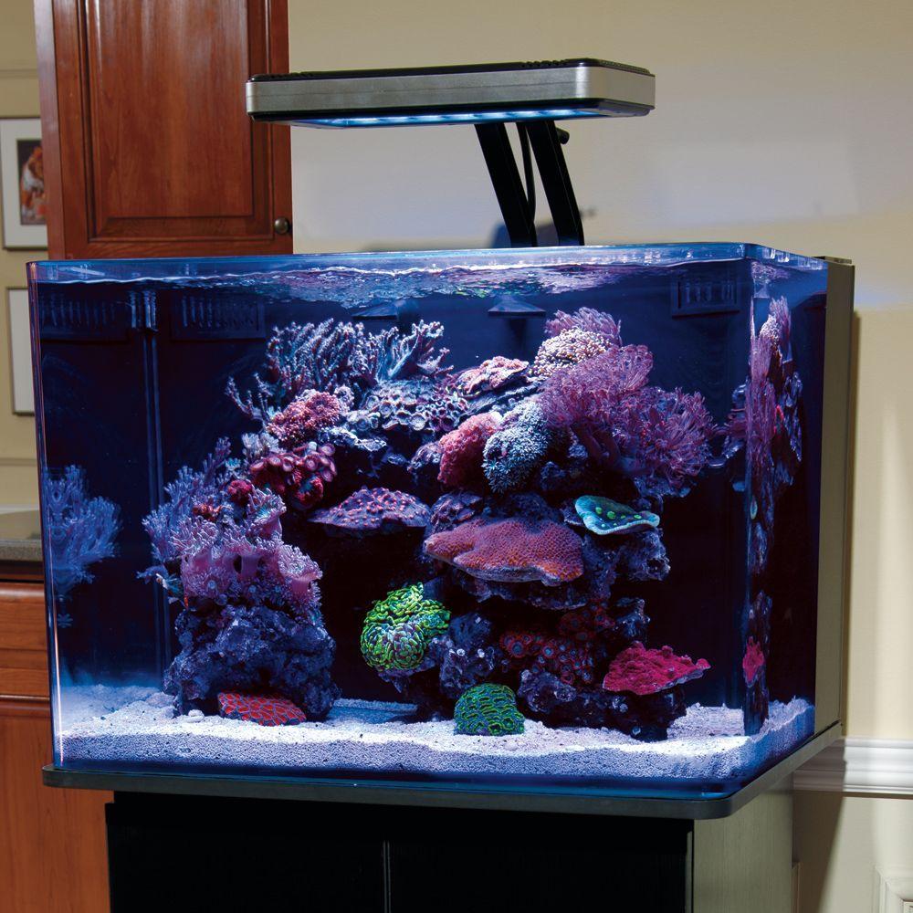 Jbj 45 Gallon Rimless Glass Aquarium In 2020 Aquarium Coral Aquarium Marine Aquarium