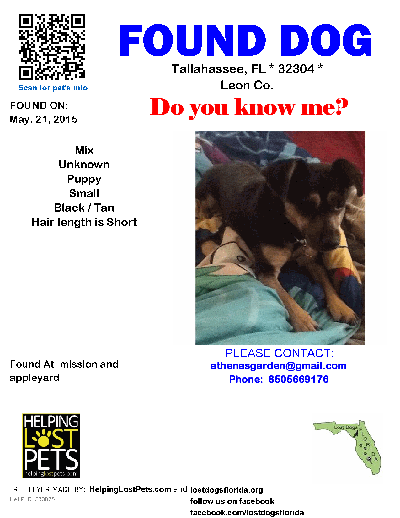 Found Dog Mix Tallahassee Fl United States Dog Mixes Losing A Dog Small Puppies