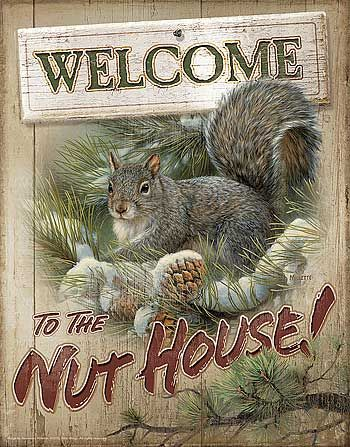 Tin Sign Squirrel Metal Tin Sign Welcome To The Nut House Lustiges Eichhornchen Eichhornchen Baby