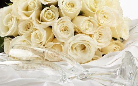 Rosas Blancas Fondo De Pantalla Y Escritorio Hd Gratis Irene