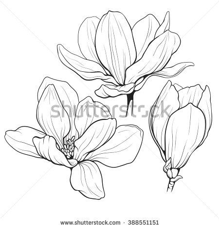 black and white line illustration of magnolia flowers on a white ...