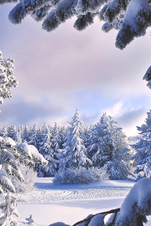 Amazing winter ambiance #winter #wonderland #inspiration Visit www.circu.net