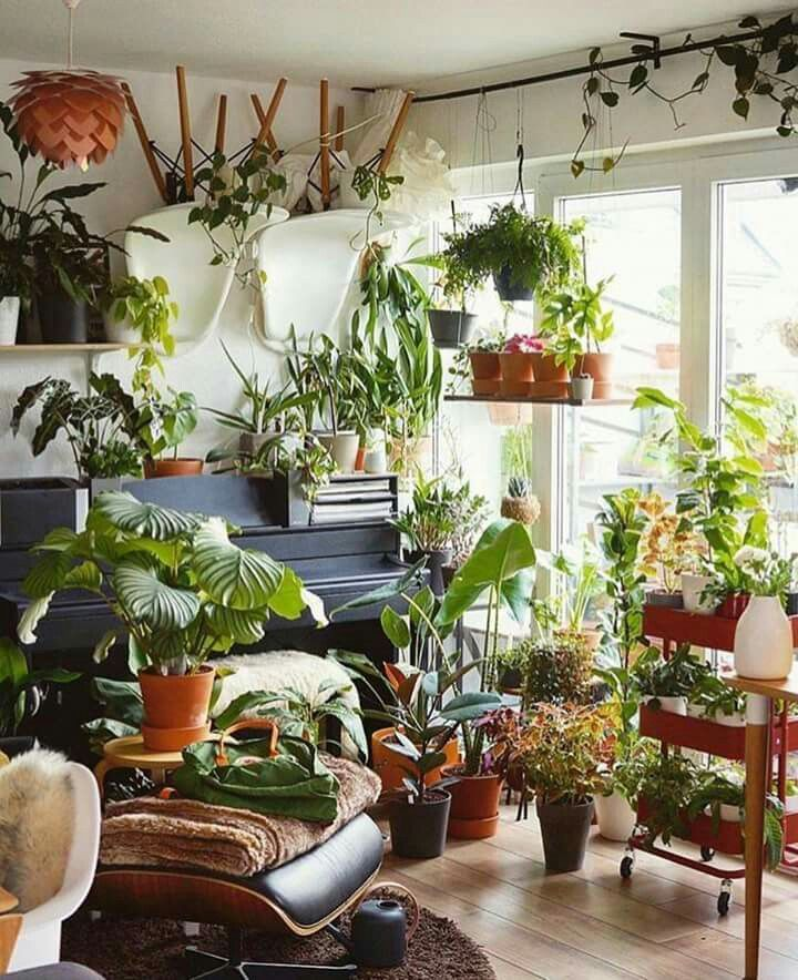 You Can Never Have Too Many Plants Garden Indoor 640 x 480