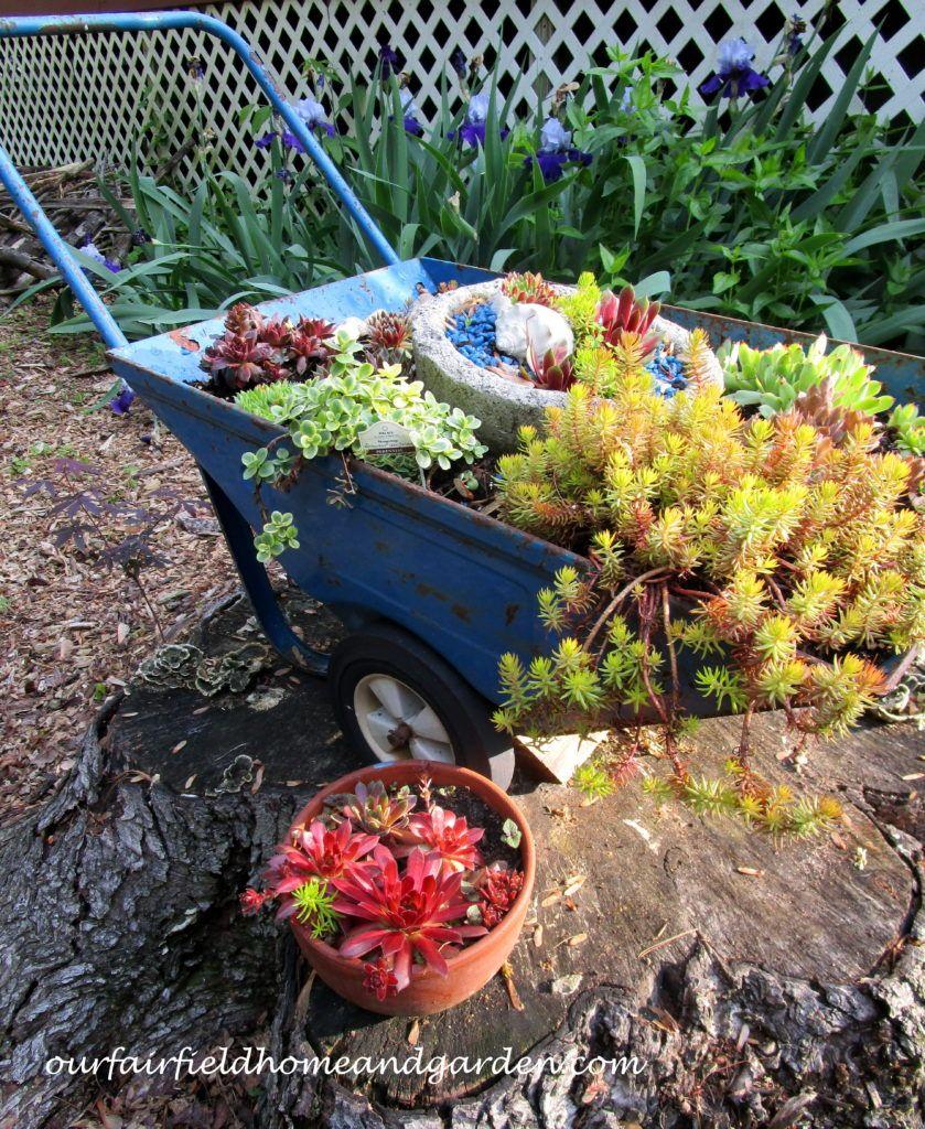 Succulent Wheelbarrow Planter Succulents garden, Home