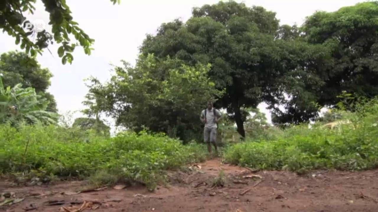 Mozambique: sin mosquitos no hay elefantes