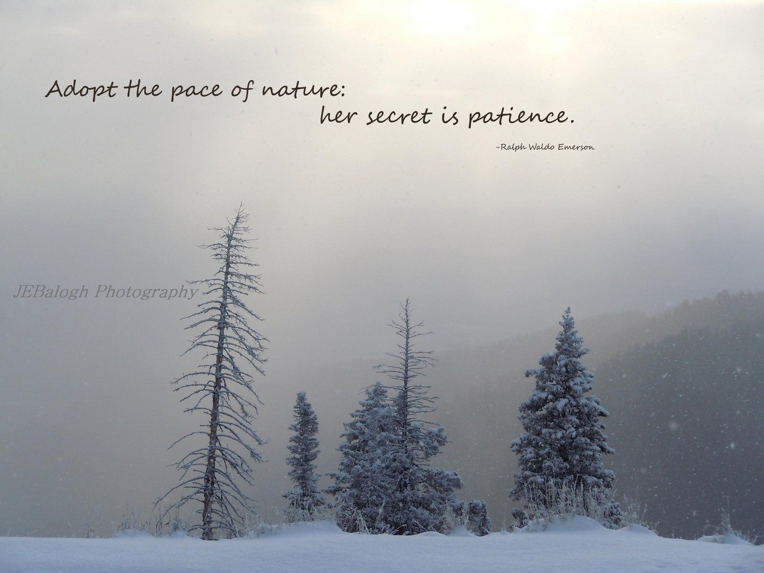 Nature Photography Inspirational Quotes Winter Wonderland Etsy Nature Photography Quotes Short Nature Quotes Quotes About Photography