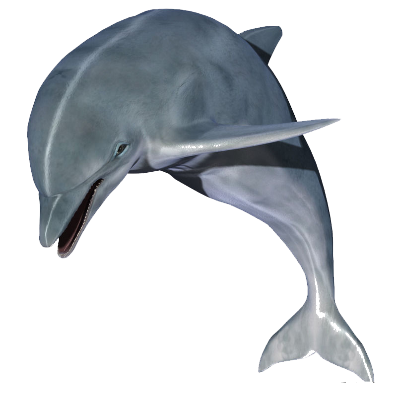 Jumping Dolphin Image Dolphin Images Animals Dolphins