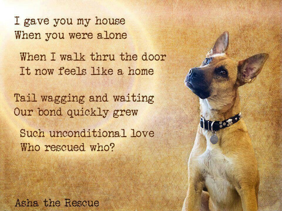 Rescue Dog Poems And Quotes Quotesgram Dog Poems Dog Love Rescue Dogs