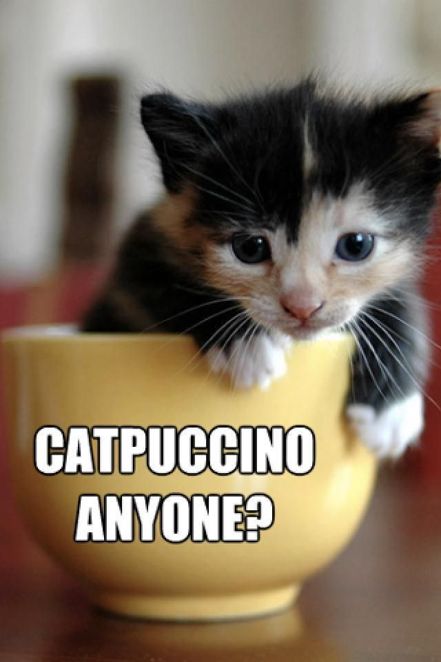 Catpuccino Anyone Funny Cats Cats Kittens Cats