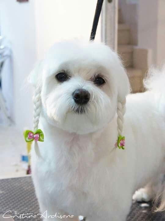 Beautiful Hunde