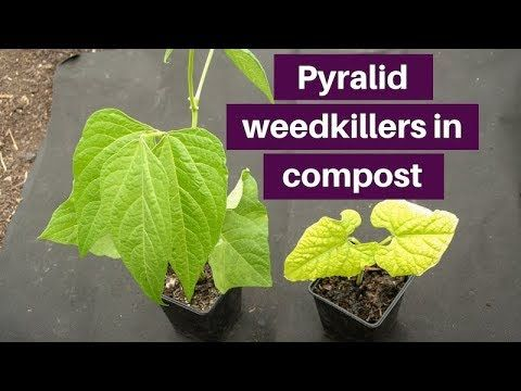 Pyralid weedkillers in compost 2: amino- and clopyralid, effects and hea...