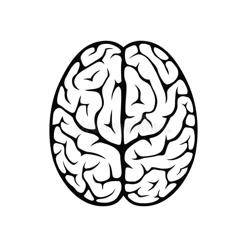 Brain Top View Outline Top View Illustration Of Human Brain Isolated On White B Sponsored Ad Affiliate In 2020 Brain Drawing Brain Images Human Brain Diagram