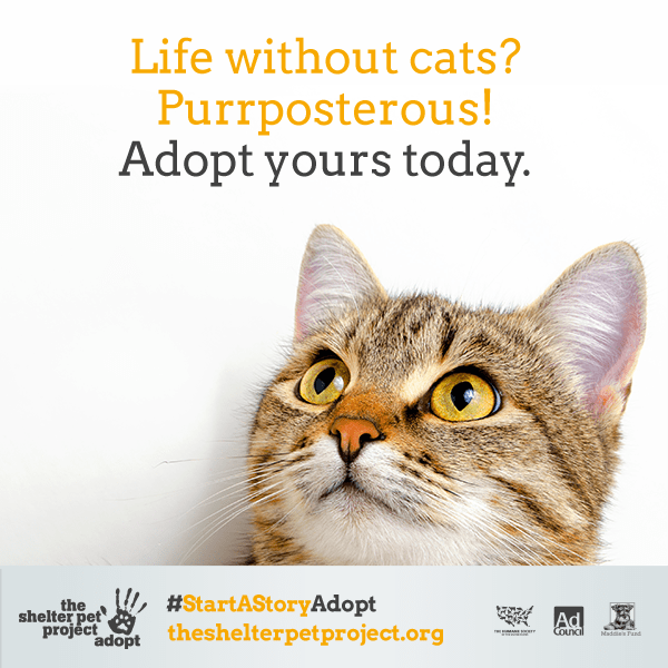 22 Clever Cat Adoption Ad Campaigns Cat Adoption Kitten
