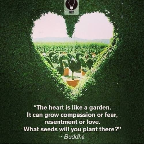 What seeds will you plant?