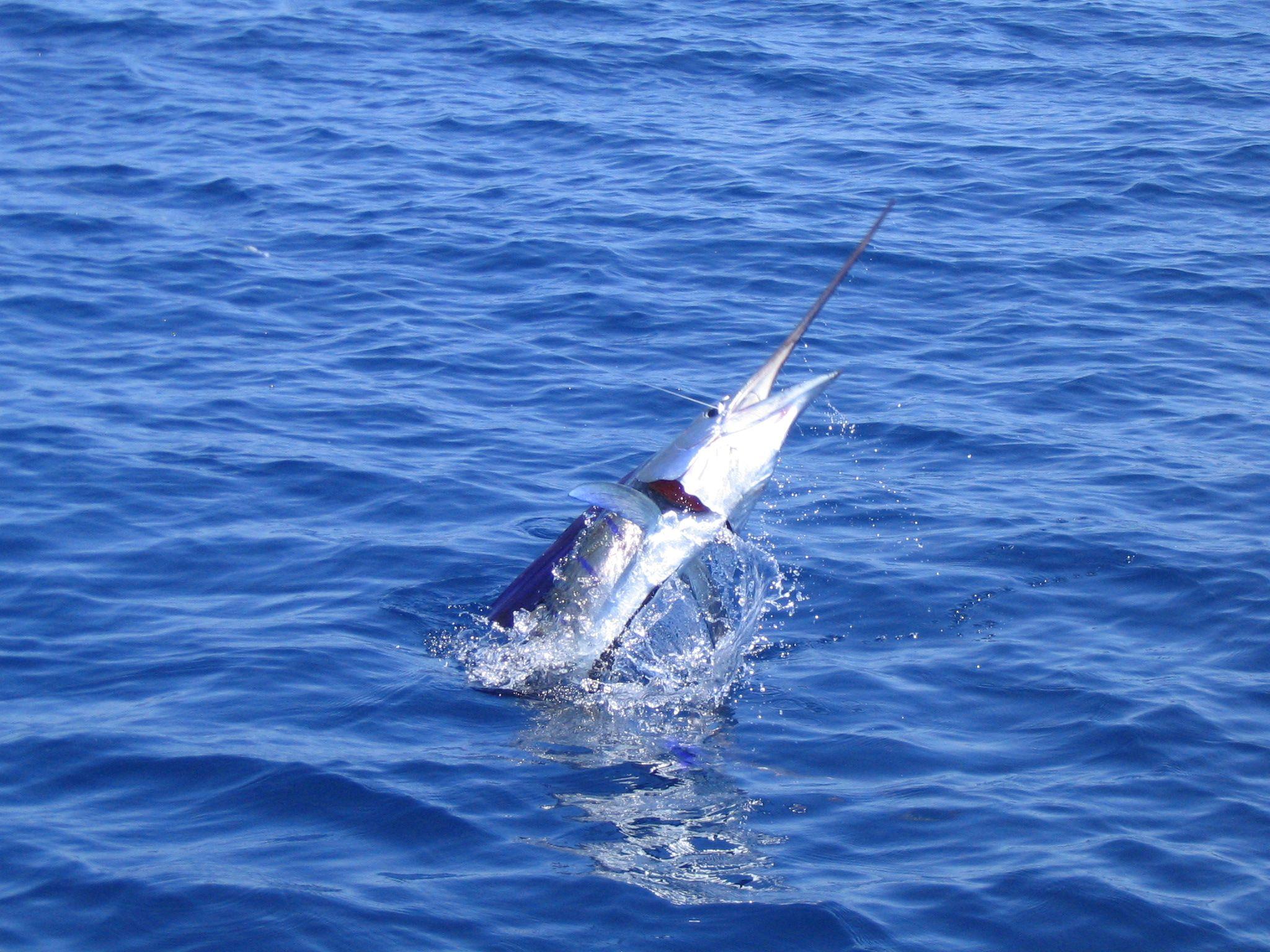 Costa Rica Sport Fishing Unlimited  Playa Zancudo  Deep Sea Fishing Marlin